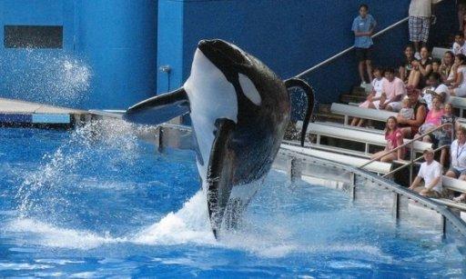 Tilikum, SeaWorld Orlando, undated/ Mathieu Belanger, Reuters, The New York Times