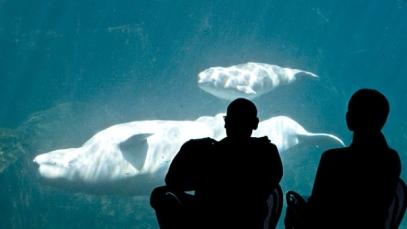 Vancouver Aquarium, undated/John Healy, Vancouver Aquarium