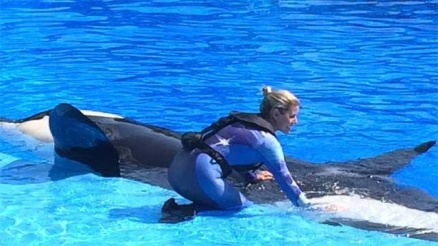 Unidentified trainer in new safety vest, SeaWorld Orlando, April 28, 2014/Clickorlndo.com