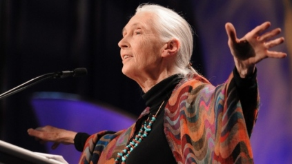 Jane Goodall accepting an award, Long Beach, CA, Oct 27, 2009/Katy Winn, AP, CTV News