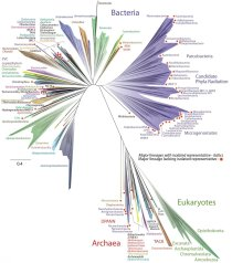 New Tree of Life Diagram by Jill Banfield, UCBerkeley, Laura Hug, U of Waterloo / The New York Times / Click to learn more.