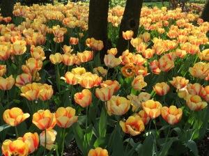 Jefferson Market Garden, Greenwich Village, NYC 4/22/16