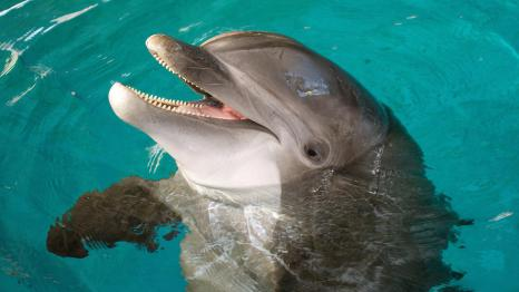 Bottlenose dolphin Nani, National Aquarium, undated / The Baltimore Sun / Click for more.