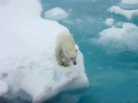Polar bear on Arctic Ice, undated / Kathy Crane, NOAA, The Washington Post / Click for more.