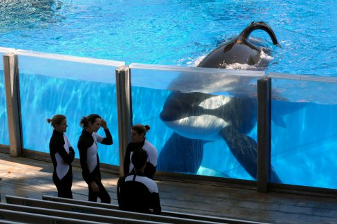 Tilikum, SeaWorld Orlando, 2010 / Phelan B. Ebenhack, AP, The New York Times / Click for more.