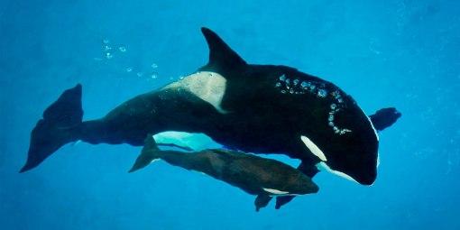 Tamara with baby Kyara, SeaWorld San Antonio, undated / SeaWorld Cares / Click for more.