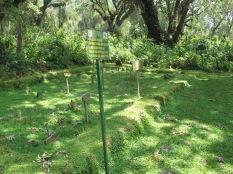 Gorilla graveyard, Karisoke, Volcanoes NP