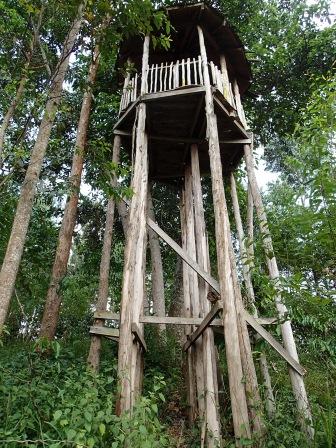 Abandoned watchtower, Bigodi Wetlands Sanctuary