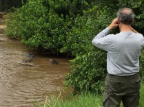 Marc watching hippos, Ishasha River, Queen Elizabeth NP