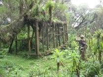 Remains of workers' cabin, Karisoke, Volcanoes NP