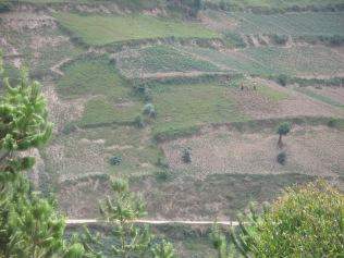 People in distance working hillside fields, road to Bwindi