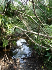 Special spot, Bigodi Wetlands Sanctuary