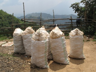 Sacks of potatoes sitting at roadside, road to Lake Bunyonyi