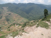 Valley, view of Bwindi Impenetrable Forest boundary