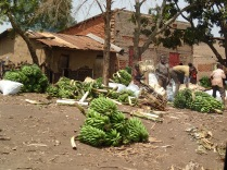 Banana market, road to Crater Safari Lodge