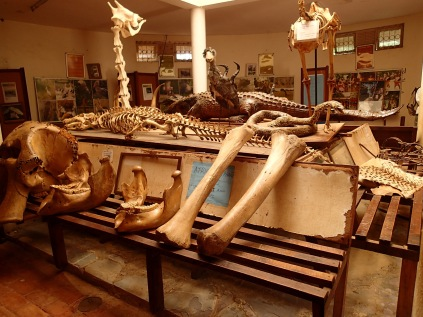 Animal bone display, Entebbe Wildlife Conservation Education Centre, aka Entebbe Zoo