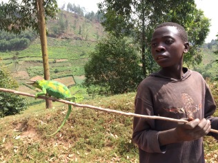 Boy with rhinoceros chameleon, Bwindi Impenetrable NP