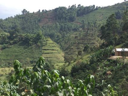 View on road to Bwindi