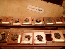 Animal dung display, Entebbe Zoo