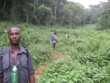 Trekkers with ranger and porters, Bwindi Impenetrable NPP