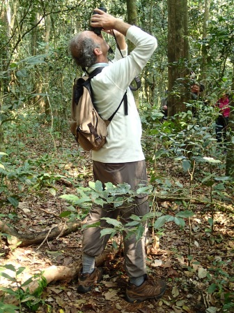 Marc watching chimps and ... could that be a potto? Kibale Forest National Park
