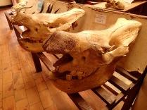 Animal skull display, Entebbe Zoo