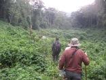 Trekkers making their way toward gorillas, Bwindi Impenetrable NP