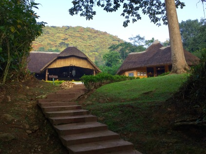 Arriving at Sanctuary Gorilla Forest Camp, a bit of a climb up a slope to a beautiful lodge, Bwindi Impenetrable NP