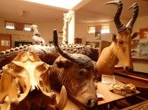 Animal head display, Entebbe Zoo