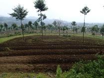 Farmland at base of mountain, border of Volcanoes NP