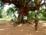Elder Tree, Entebbe Zoo