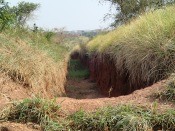 Trench to prevent elephants from raiding crops, unless they just take the road we're on, road to Queen Elizabeth NP