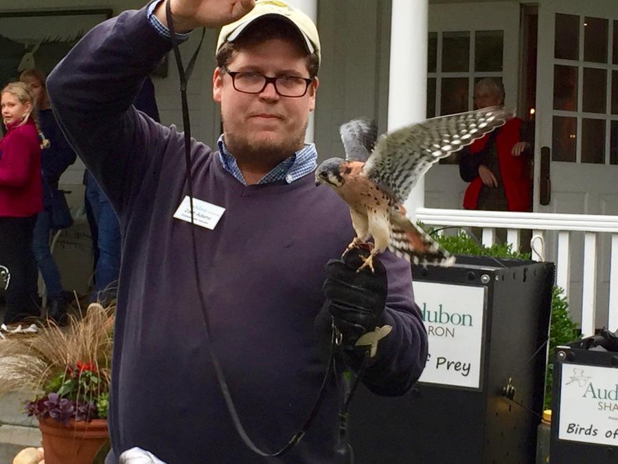 Rescued kestrel & handler, Audubon Society Birds of Prey lecture & live exhibit, White Hart Inn, Salisbury CT, Saturday Oct. 6, 2018