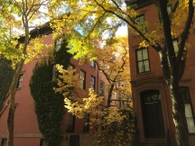 Greenwich Village, Saturday 11/3/18