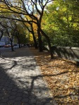 Central Park, Fifth Avenue, Wednesday 11/7/18