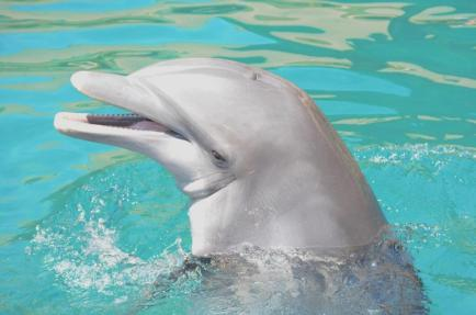 Kai, undated, Dolphinaris Arizona / Dolphinaris Arizona / Click for more.